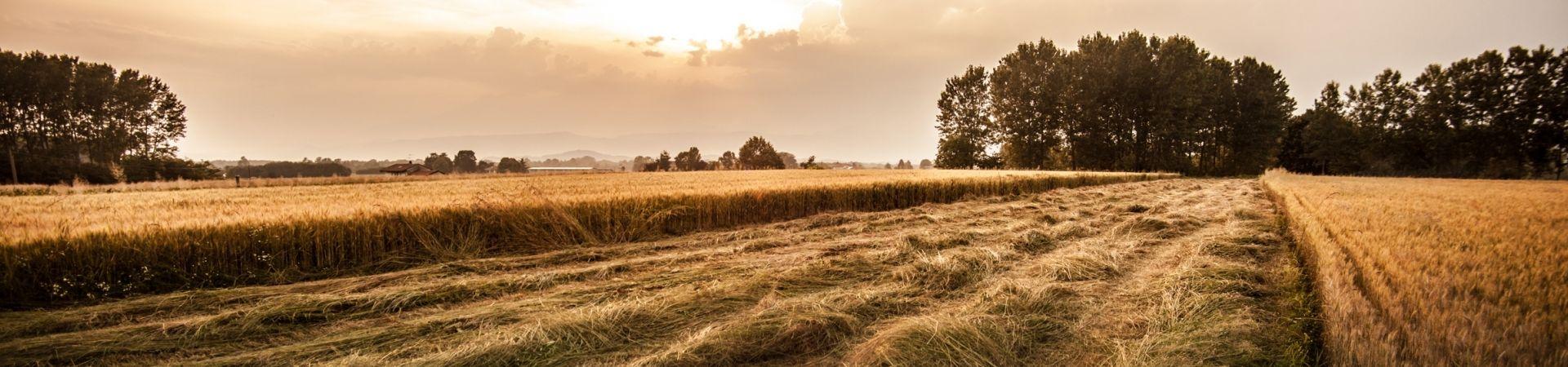 Slider wheatcut