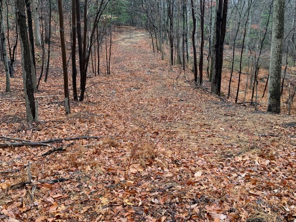 View down great oak trail, toward lots 23, 24