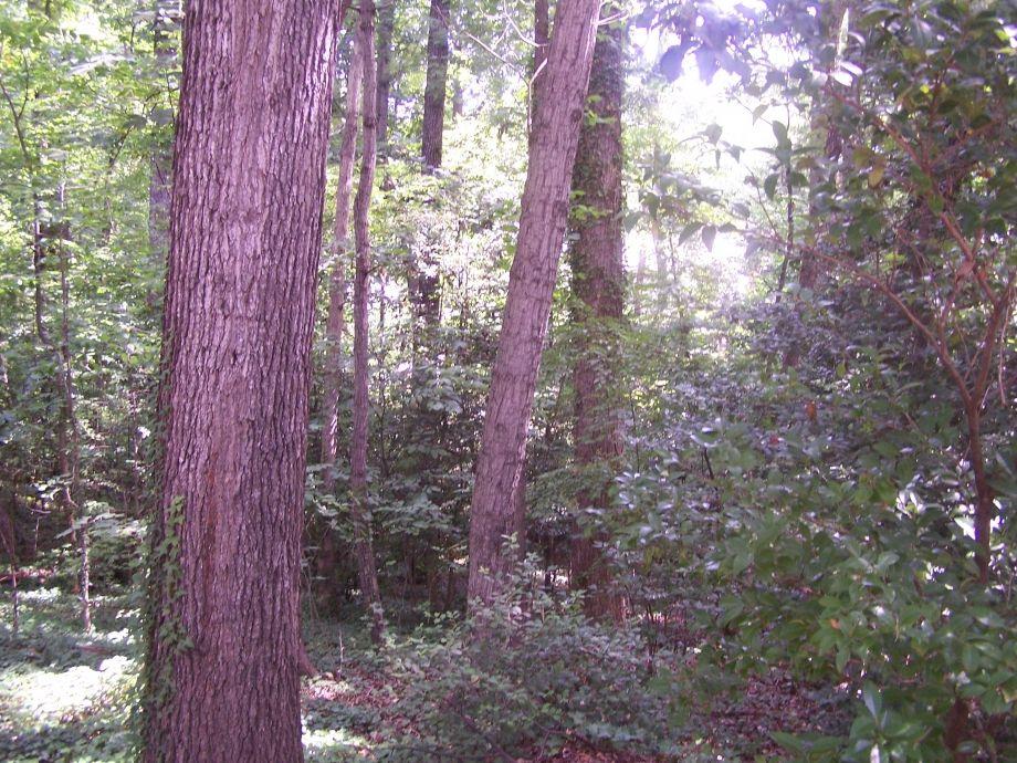 Image for 0.35 ± AC Residential Lot - Development Opportunity - 9516 Fernleigh Dr., Richmond, VA