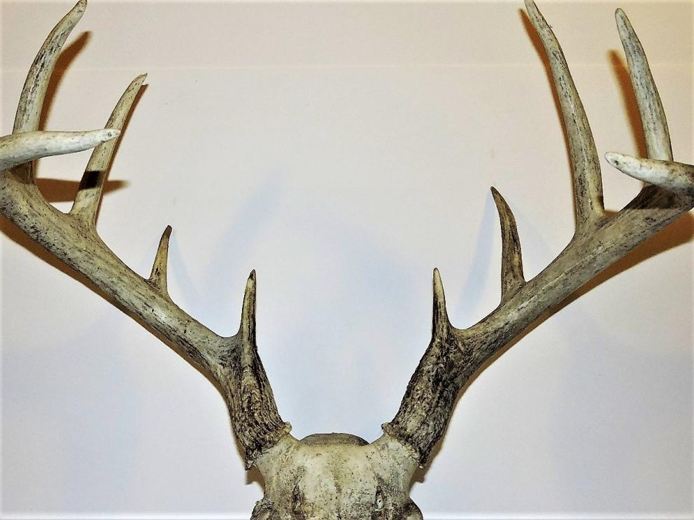 Antlers and Arrowheads